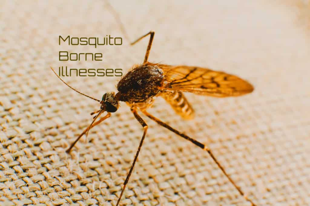 Mosquito Borne Illnesses: What You Need To Know